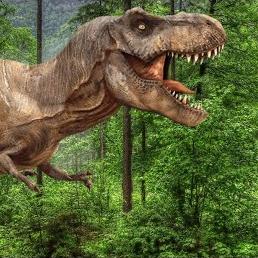 ruttus rex